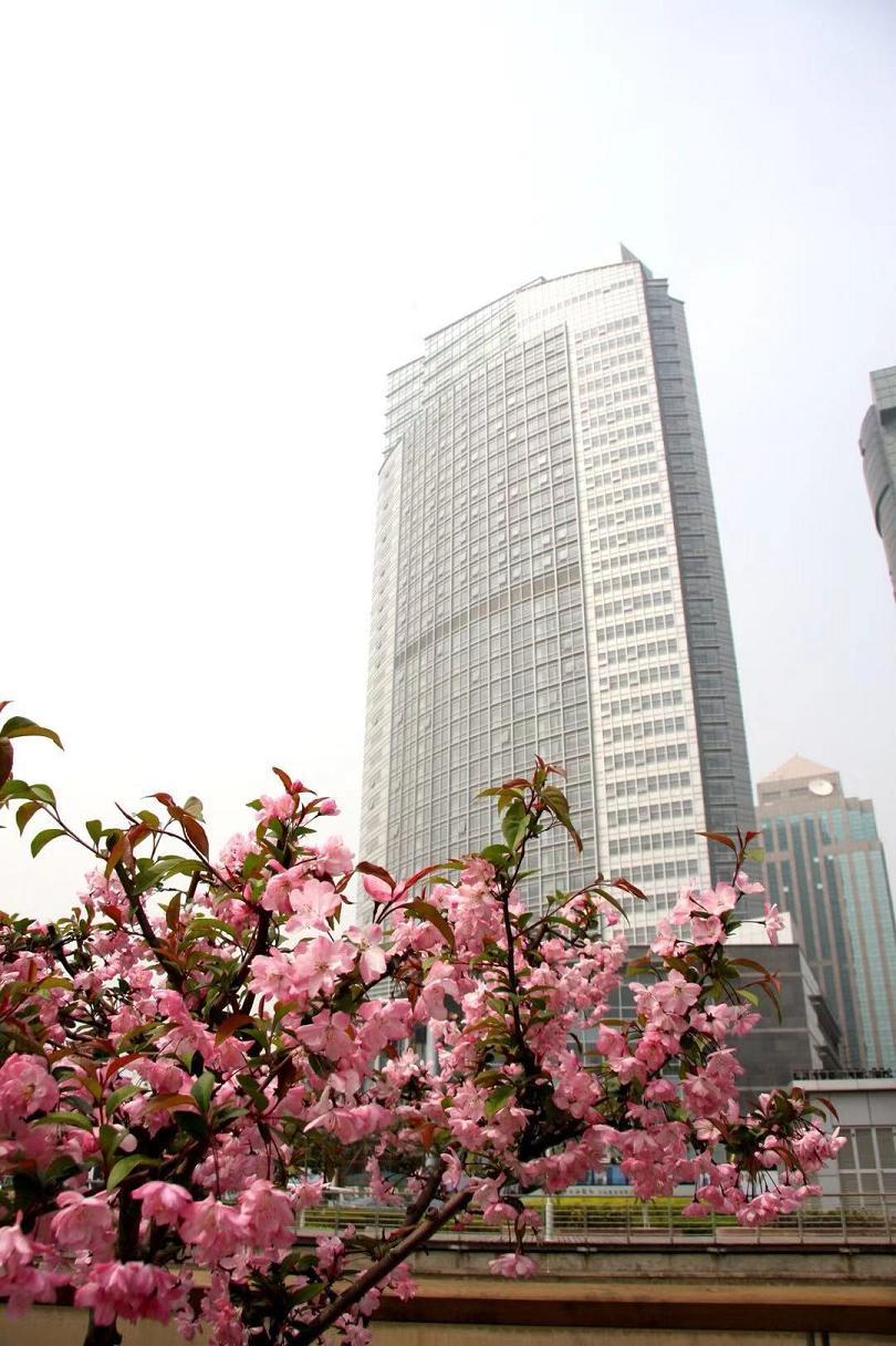国家对外文化贸易基地(上海)